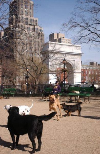 The dog run at the park.