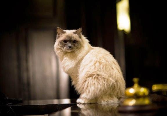Matilda, the hotel's current resident cat.